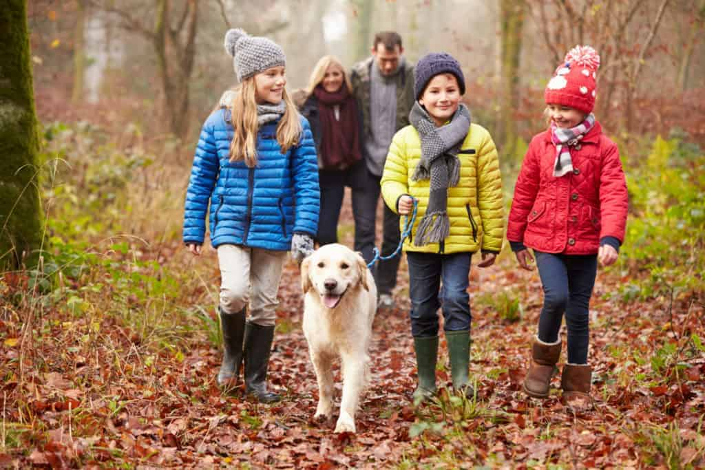 Family walking in the woods at Christmas